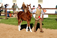Championships-Sect D Foal