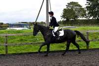 Show jumping-80cm