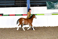 Class 51-Foal any breed - to make Lead rein, 1st ridden