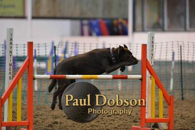 Paul Dobson Photography: Class 39 Lge Ag grd 1-7 &emdash; 037_5301